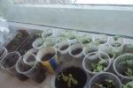 Выращивание овощной и цветочной рассады классными коллективами школы, организация внутришкольного конкурса «Цветущий школьный двор»